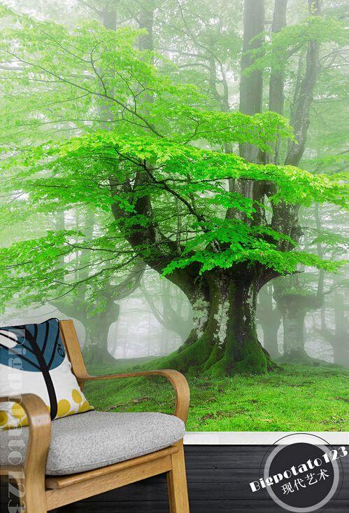 过道玄关背景墙、唯美清新森林树林大树绿叶茂盛风景摄影玄关